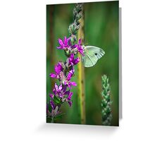 White Cabbage Butterfly Greeting Card