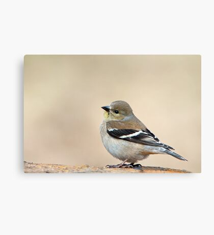 I can't help it if I'm cute . . . Canvas Print
