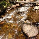 Crossing at upper Whites Creek by Dan Whittemore