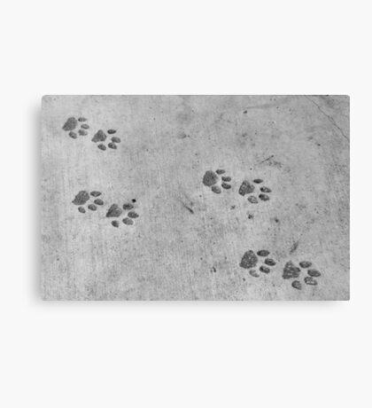 Panther footprints  Canvas Print