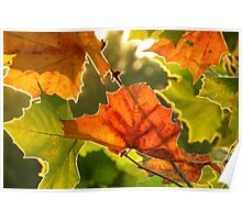Summer, Silver Linings'  ~ Series Fall colors in August 1of 1 Poster