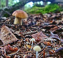 Scenic Shrooms by copperhead