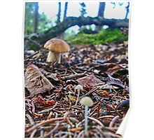 Scenic Shrooms Poster