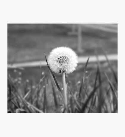 Wishing Flower Photographic Print