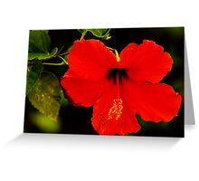 Even Beauty Has Flaws Greeting Card