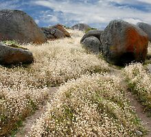 Grass tails among the granite by John Wallace