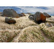 Grass tails among the granite Photographic Print
