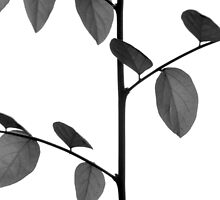 Stems And Leaves by Komang