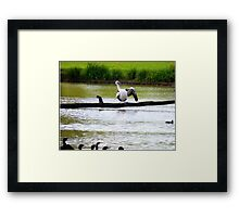 Watch carefully, you put one wing up and you shake it all about ---- Framed Print