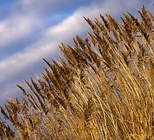 Winter Grass by Ray Clarke