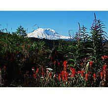 Wildflowers & Mt. Rainier Photographic Print