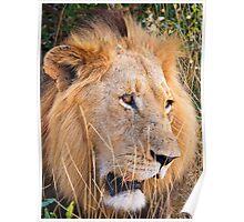 Kruger King Poster