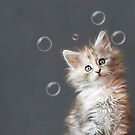 Maine Coon Kitten by Catherine Hamilton-Veal  ©