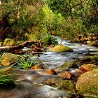 Stony Creek  by Jeff Reid