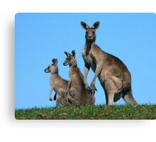 Kangaroos By Three Canvas Print