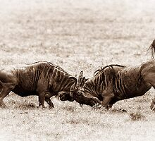 Wildebeest at War by Scott Carr