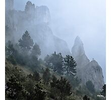 Pines, mist and cliff Photographic Print