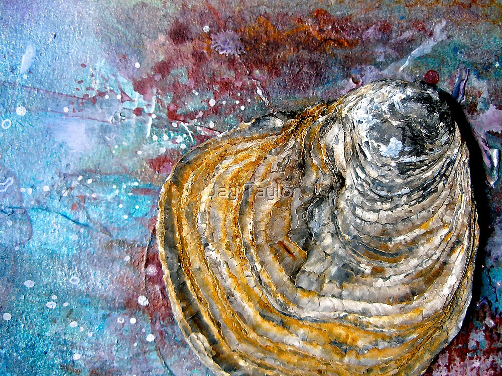Shell Abstract by Jay Taylor