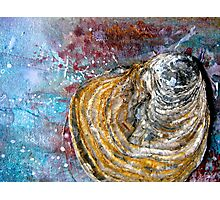 Shell Abstract Photographic Print