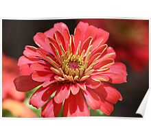 Red flower 2418 Poster