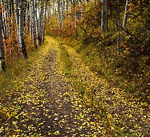 Aspen Trail by Alex Burke