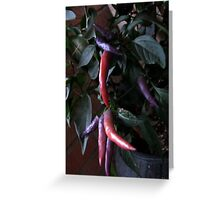 Pink, Purple Peppers Pizazz Greeting Card