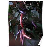 Pink, Purple Peppers Pizazz Poster