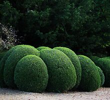 Spherical Topiary by Jennifer Bradford