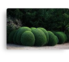 Spherical Topiary Canvas Print