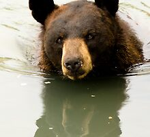 Black Bear by Sean McConnery