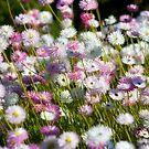 Sea of Petals... by GerryMac
