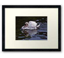 Graciousness !!! Framed Print