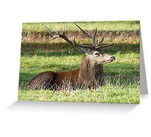 Resting - Red Stag Greeting Card
