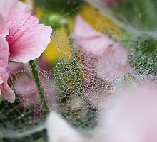 Pansies and spiderweb by neva2010