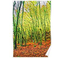 Autumn in a beech forest Poster