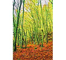 Autumn in a beech forest Photographic Print