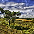 """""""Forest View"""" - New Forest National Park Hampshire England by silvcurl09"""