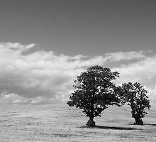 Four Trees by Smaxi