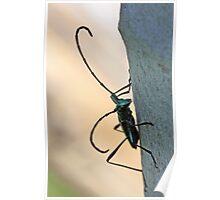 Emerald Longhorn beetle Poster