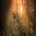 Inner Landscapes... Forest floor... by David Mould