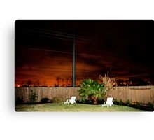 A Suburban Backyard Canvas Print