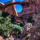 "Double ""O"" Arch by Terence Russell"