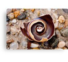 Broken spiral shell Canvas Print