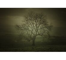 Early morning tree art Photographic Print