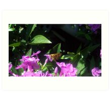 Moth landing on a flower Art Print