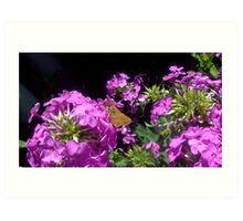 Moth on a flower 2 Art Print