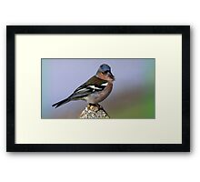 The Chaffinch  Framed Print