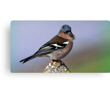 The Chaffinch  Canvas Print