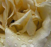 Raindrops on Roses by Malika Everingham