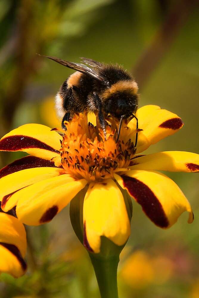 Bumble by Neal Petts